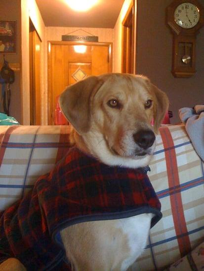 Cozy Pup
