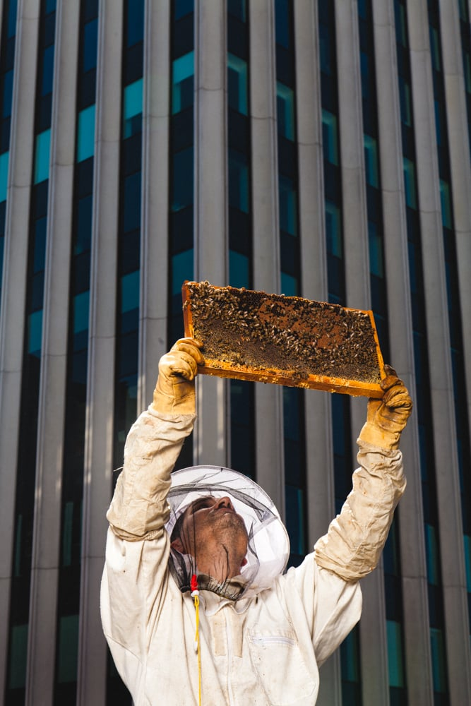 Laundering Hurts Beekeepers and the Bee Population
