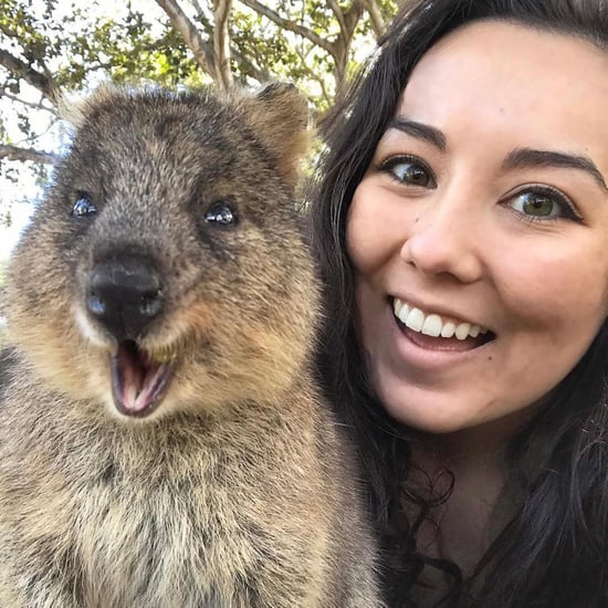 Rottnest Island Quokka Pictures