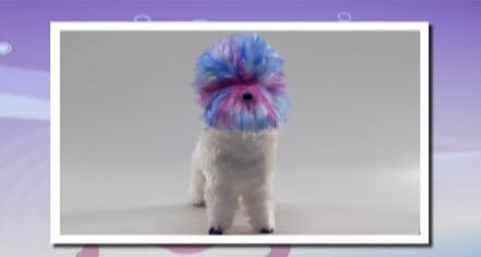 "Groomer Has It Recap: ""First Things First"""