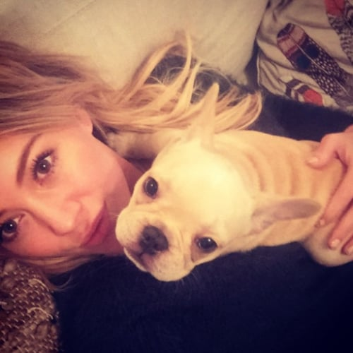 Hilary Duff's Dog Beau Dies