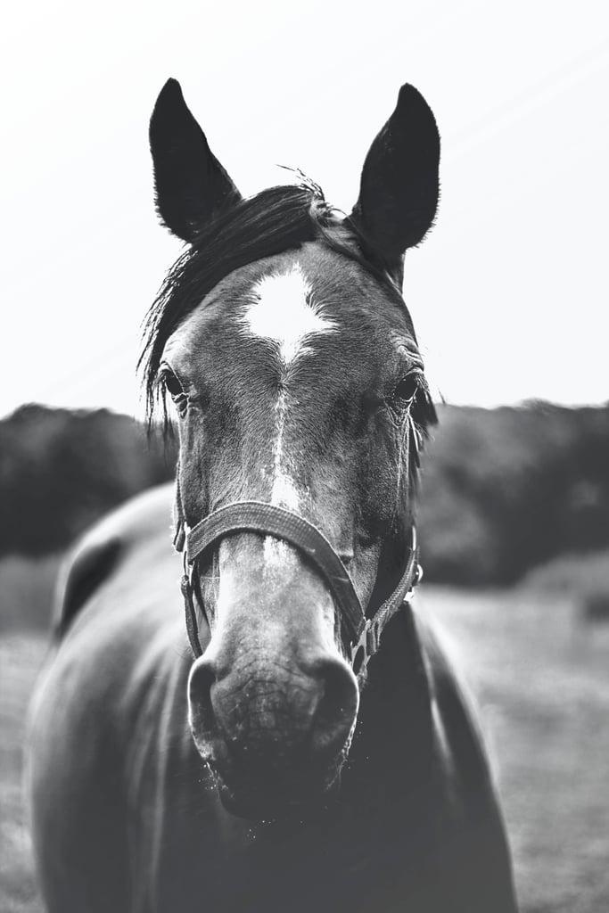 Black And White Horse Free Printable Wall Art Popsugar