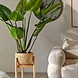 Eva Curcuma Potted Faux Tree