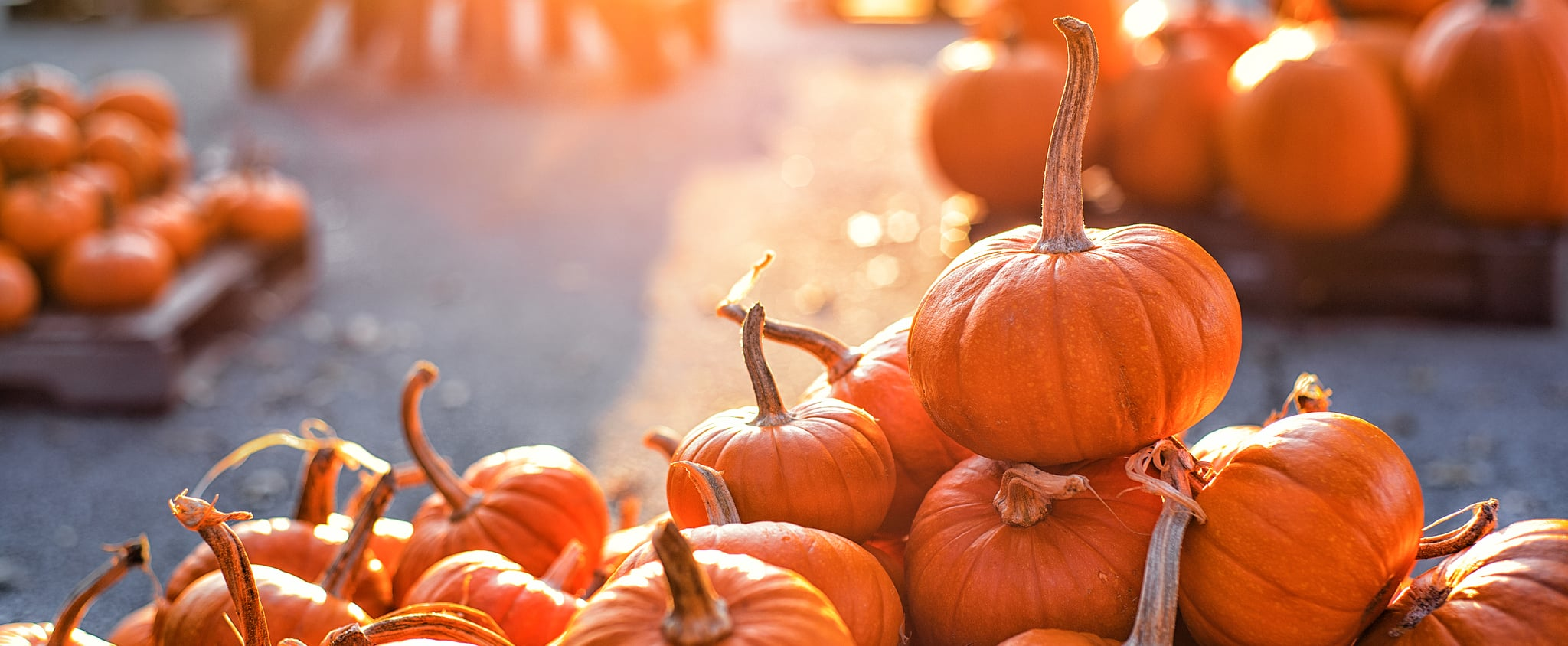 How To Safely Visit A Pumpkin Patch This Fall Popsugar Smart Living