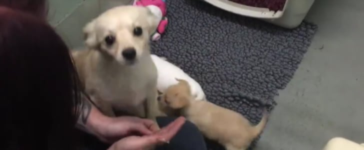 Dog Reunited With Puppies | Video