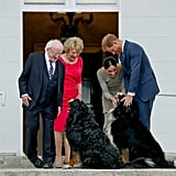 Meghan and Harry had to pause their visit with Ireland's president Michael Higgins and his wife Sabina as they greeted these dogs during their visit to Ireland in July 2018.