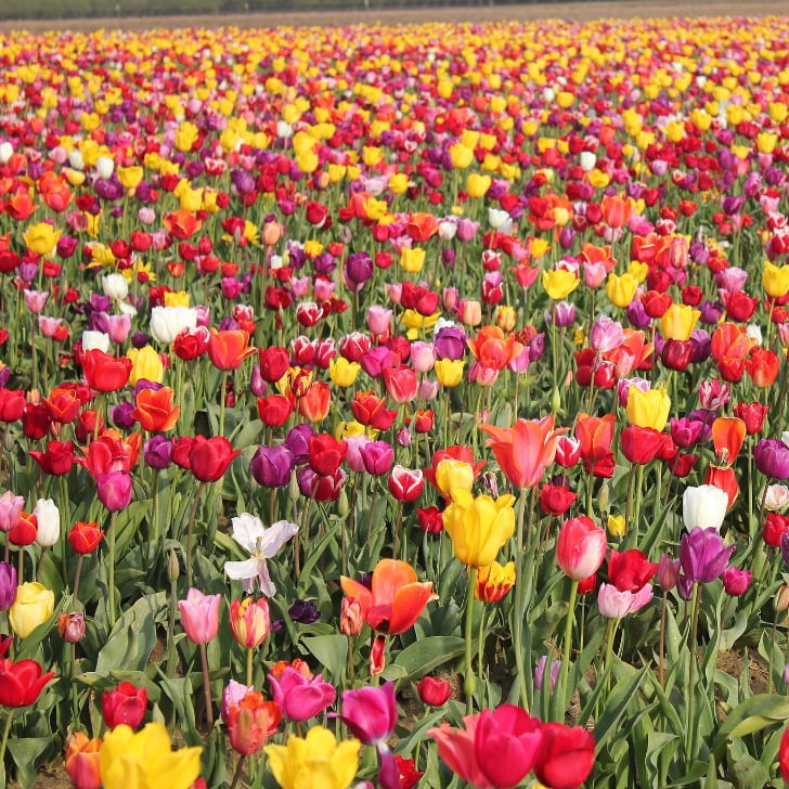 Best places to see flowers in america popsugar smart living mightylinksfo