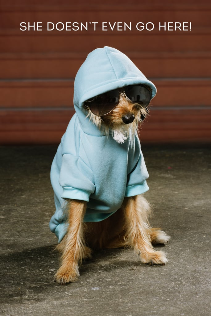 Dogs Dressed as Mean Girls Characters | POPSUGAR Australia