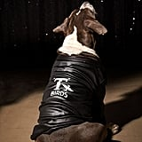T Birds Jacket Dog Halloween Costume
