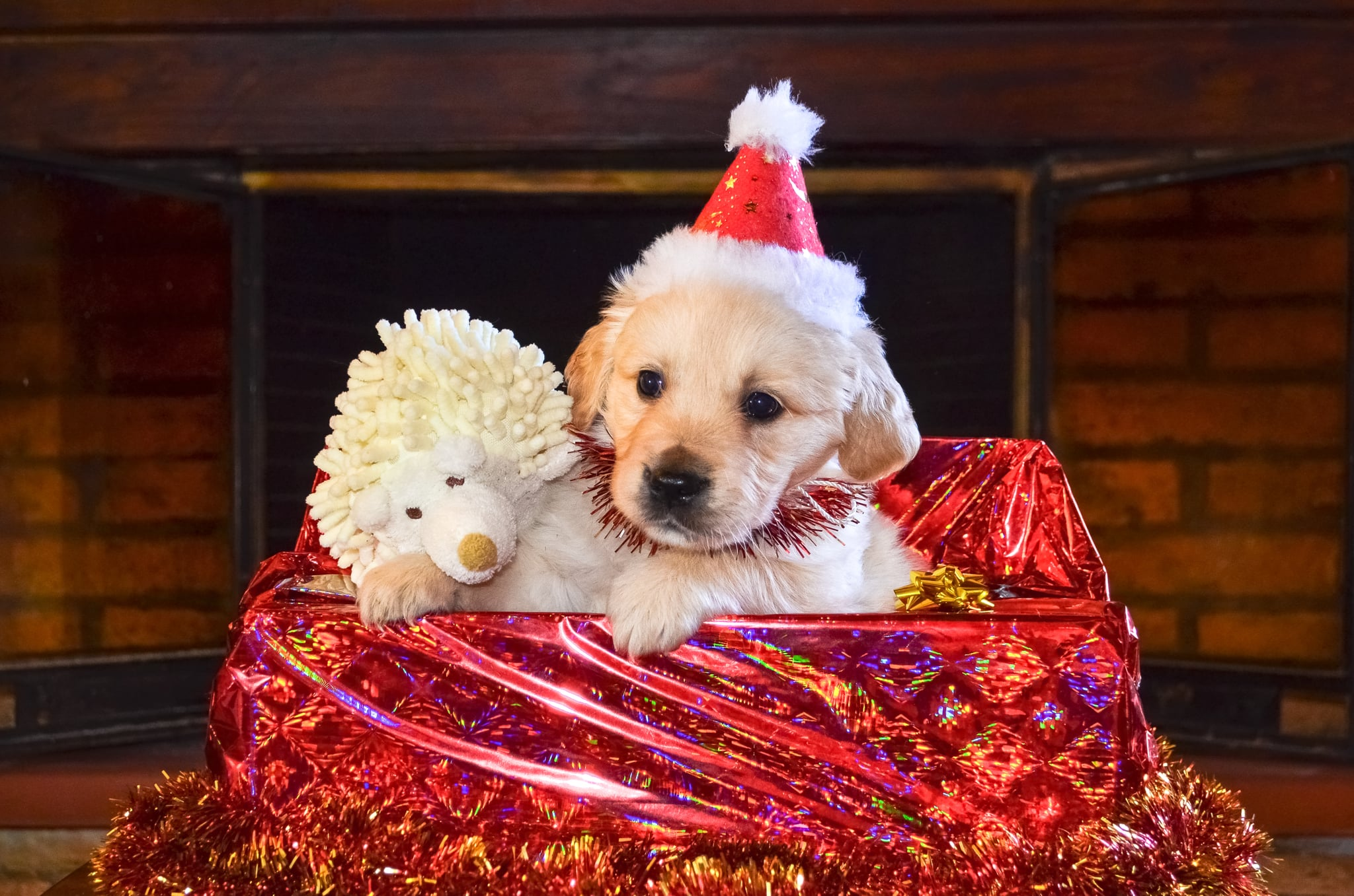 Puppy S Favorite Present What S Better Than Christmas And Puppies Answer Christmas Puppies Popsugar Pets Photo 4