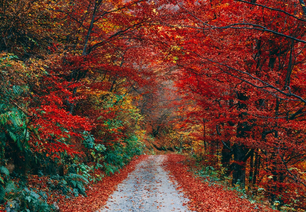 Pretty Pictures of Fall