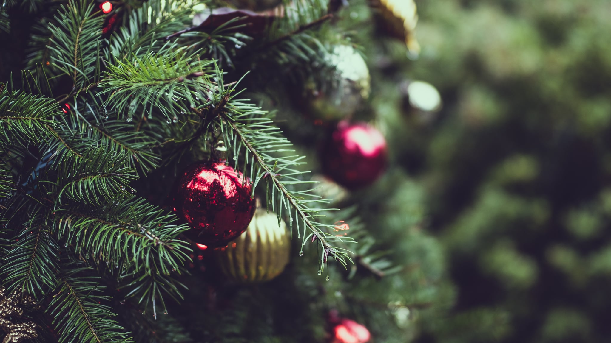 How Often Should I Water My Christmas Tree? | POPSUGAR Moms