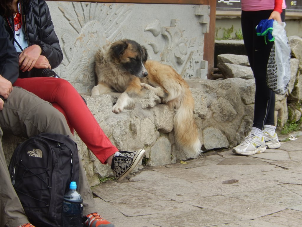 While visiting Machu Picchu was an obvious highlight on my last trip to Peru, what I was perhaps more excited about were the endless street dogs littering the cities. Everywhere you looked, there were dogs of all shapes and sizes lounging around and mingling with the people. I obviously love dogs so I found this exciting, but I was shocked to find out that not only were all these dogs incredibly well-behaved, but they were also well cared for. Just because they live on the streets doesn't mean they're abandoned. There were bowls of food and water left out on doorsteps and storefronts, and people often would stop and lavish the dogs with attention before continuing on their way. While at Machu Picchu, there was a dog playing in the street, and a man actually stopped traffic to guide the dog out, though admittedly, traffic had already slowed for the dog anyway.  I wasn't quite confident enough to pet any of the dogs, but I did call them all good babies while taking their photos. Scroll through to meet just a small selection of the ones I saw!
