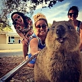 There may be no selfie cuter than one with a popular Australian creature, the Quokka.