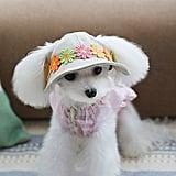 Small Pet Hat Sun Visor