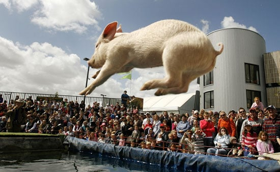 Flying Pigs Compete in Melbourne