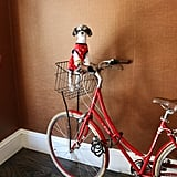 Then it was time to check into the pet-friendly Kimpton Hotel Monaco Denver, where I got to get some beauty sleep, hydrate, and take a bike ride around the city of Denver!