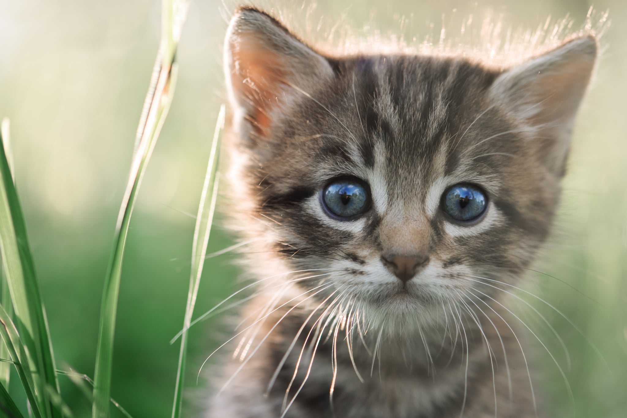 cool cat videos