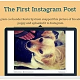 The first Instagram post was of an adorable dog.