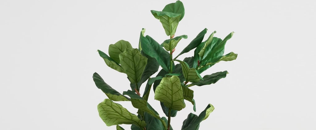 The Best Faux Fiddle Leaf Fig Tree