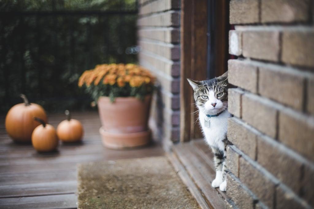 Cat Zoom Background