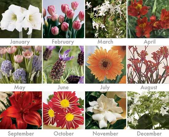 Win 12 Months of Flowers!