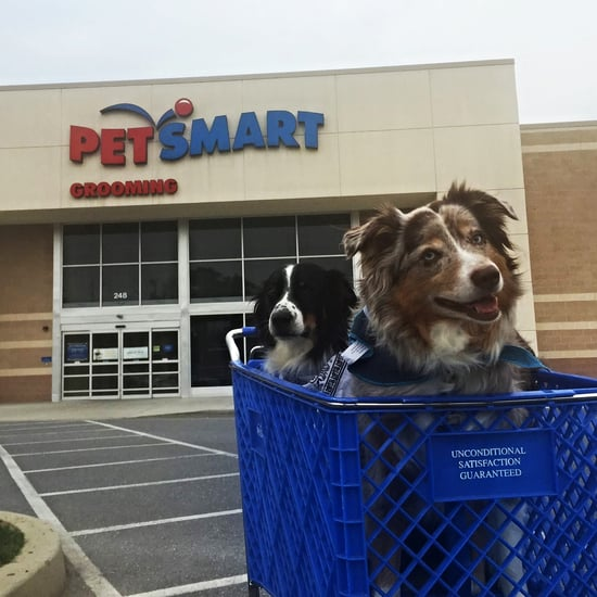Stores That Allow Dogs to Come Inside