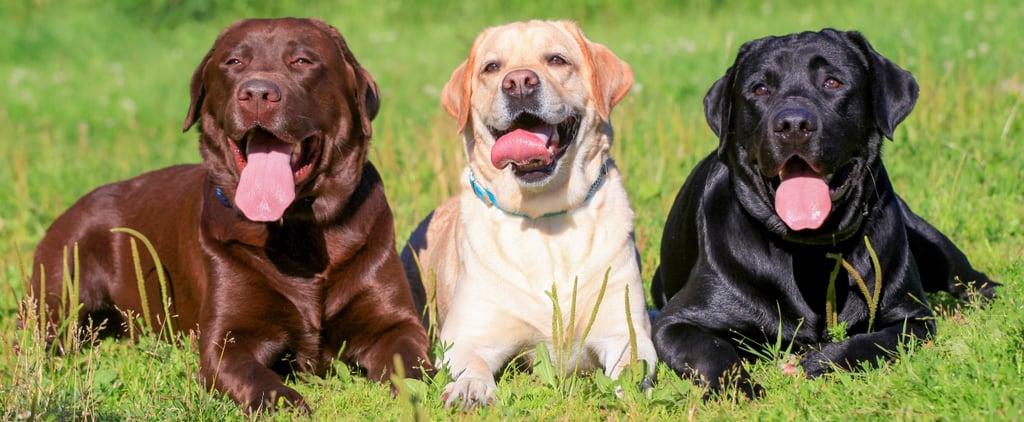 Which Dog Should You Get?