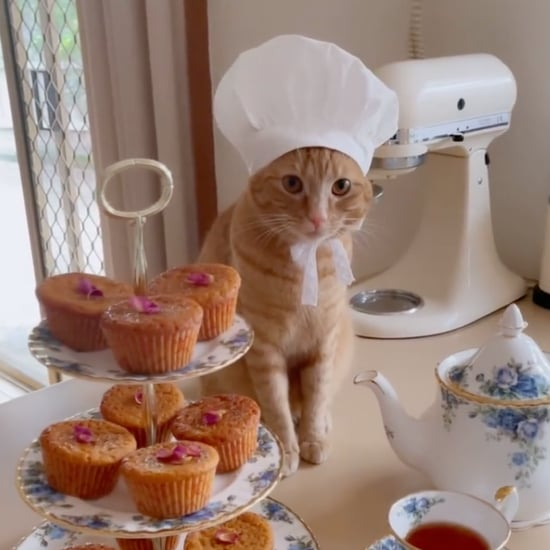 Sweet Instagram Videos of Orange Cat Making Desserts