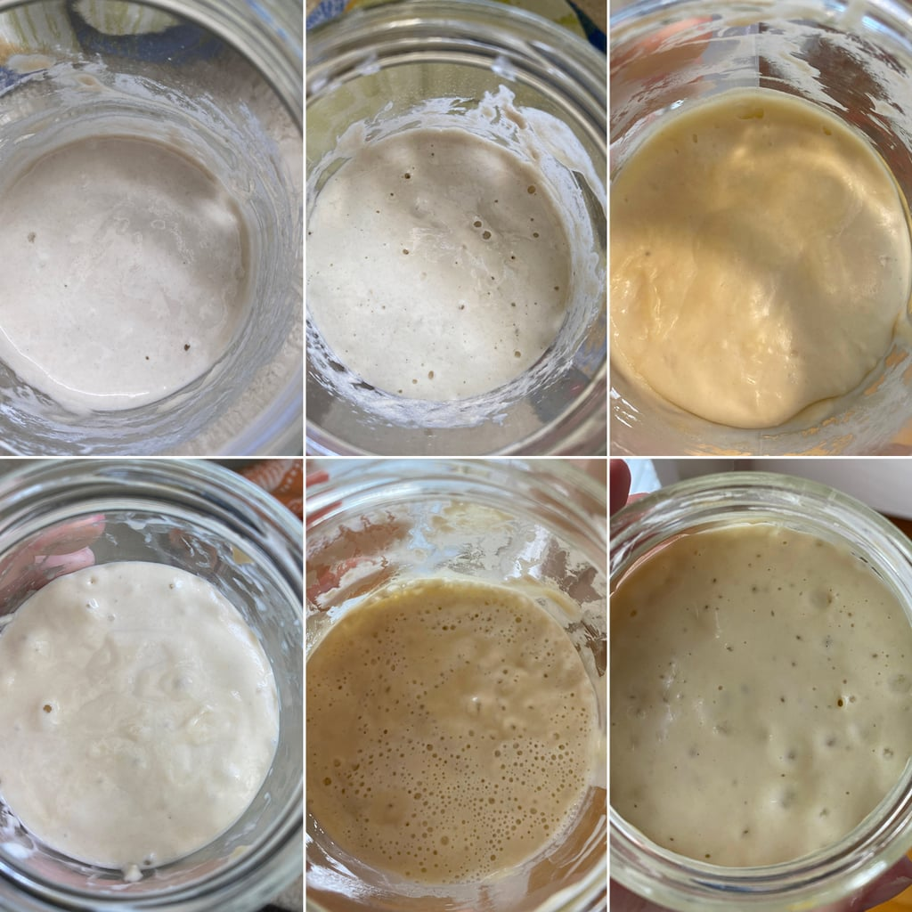 Sourdough Starter Day-by-Day Photos