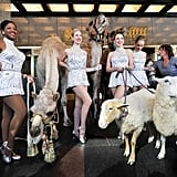 The Rockettes pose with the living nativity animals.