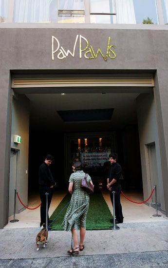 Behind-the-Scenes Peek at PawPaws Doggie Hotel in Sydney, Australia 2009-01-29 17:45:55