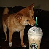 Caffeinated Canine