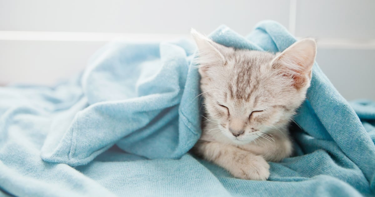 What to Do If Your Cat Sucks on Blankets, According to Vets