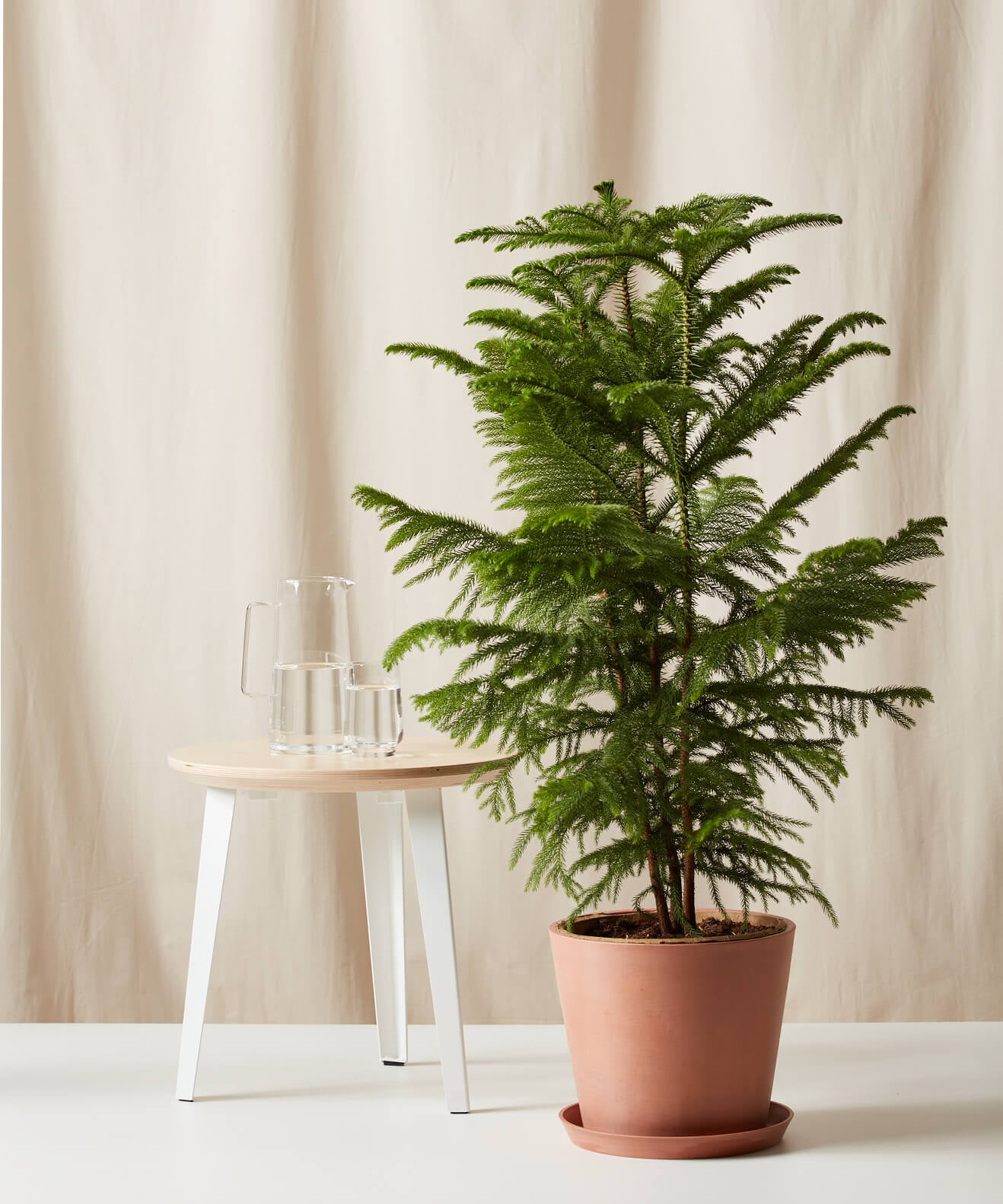 Easy Delivery Christmas Tree Alternative From Bloomscape Popsugar Home