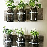 Create an Indoor Herb Garden