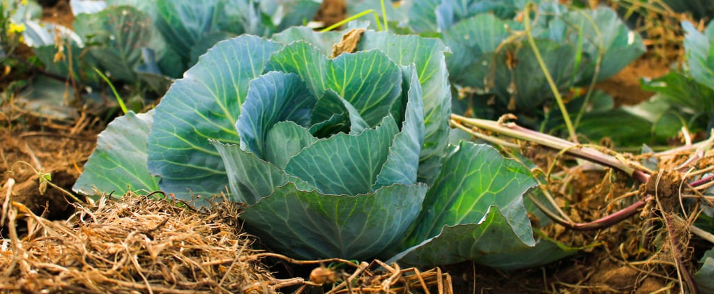 Start Prepping For Fall With These Vegetable Gardening Tips
