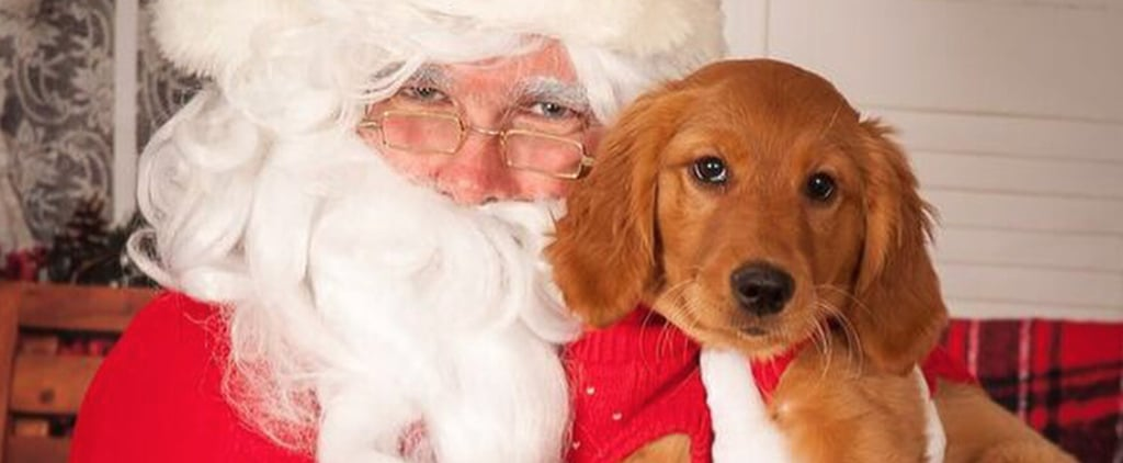Pictures of Dogs With Santa