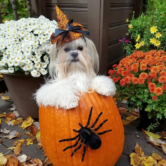 Pictures of Dogs Inside of Pumpkins