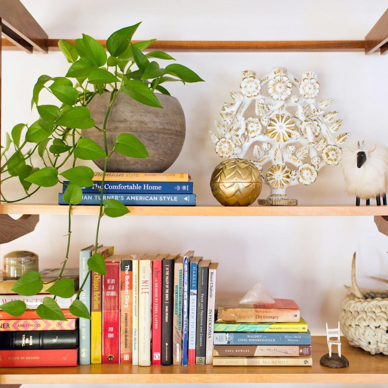 sc 1 st  Popsugar & Best Houseplants For Low Light | POPSUGAR Home
