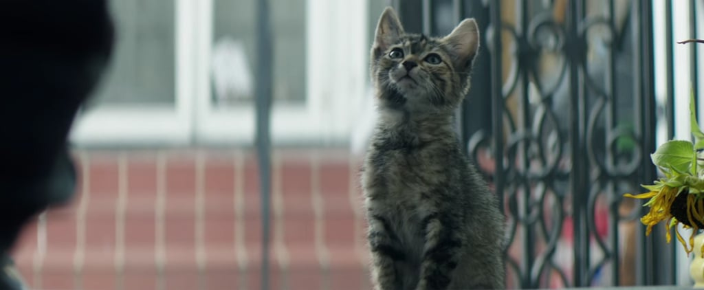 Key and Peele's Sharp-Witted New Movie Stars an Unbearably Small, Precious Kitten