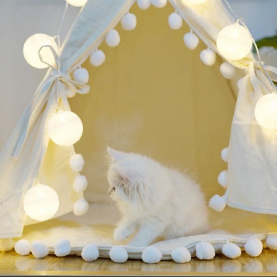 Fun Cat Products for Small Apartments