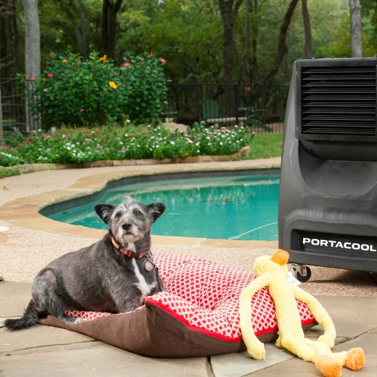 How to Keep Pets Safe in the Extreme Heat
