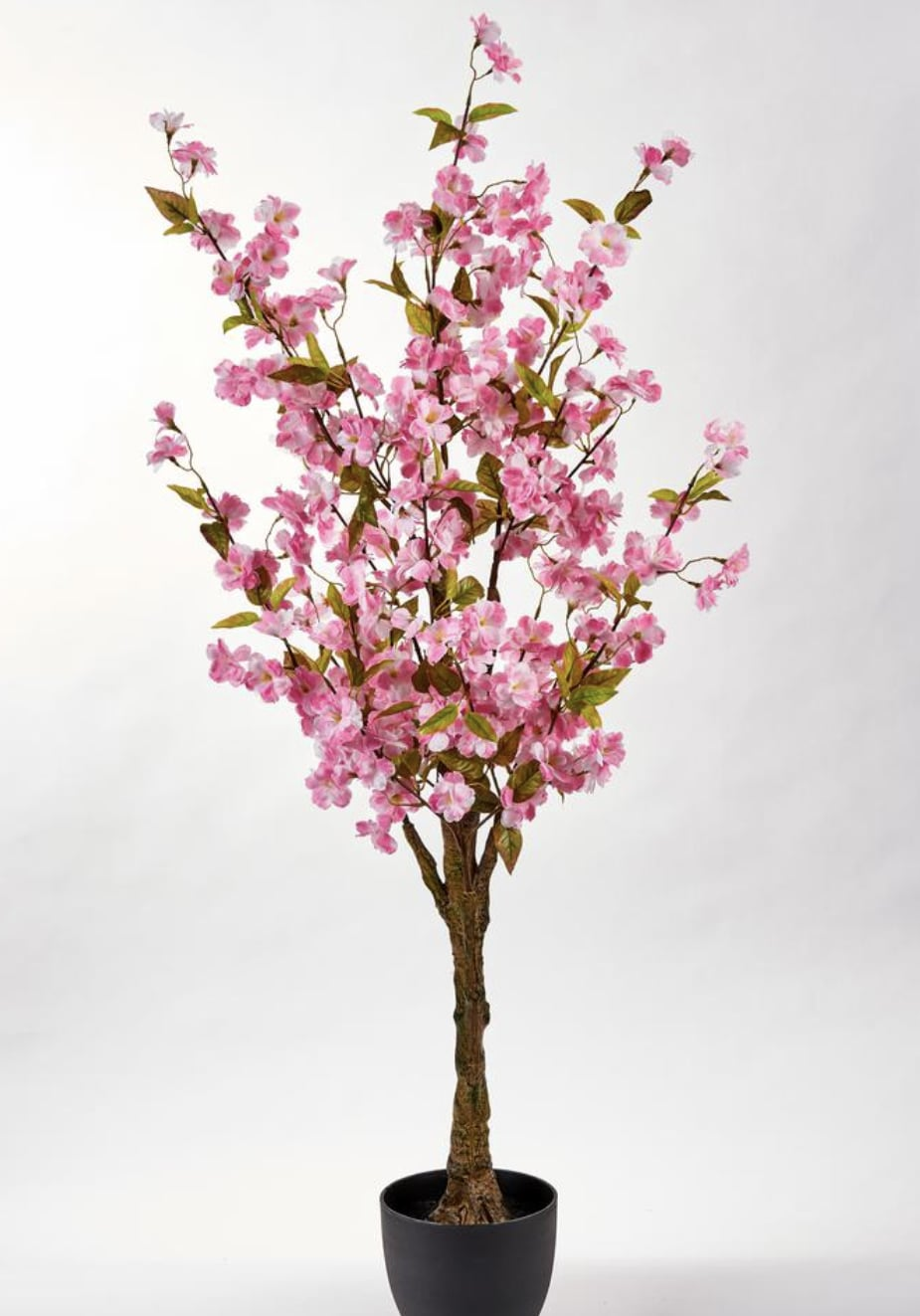 51 In Cherry Tree In Pot Home Depot Is Selling Cherry Blossom Trees For As Low As 39 So We Ll Take 2 Popsugar Home Photo 5