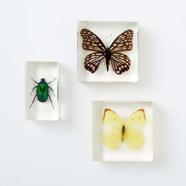 Brighten up your desk or coffee table with these resin paperweights ($14-$19) made with real butterflies and beetles!