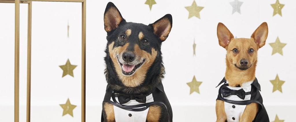 The Best Halloween Costumes for Pets