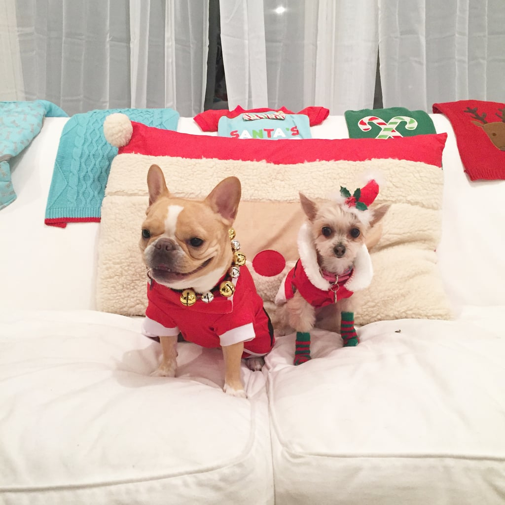 Gifts For Fashionable Dogs
