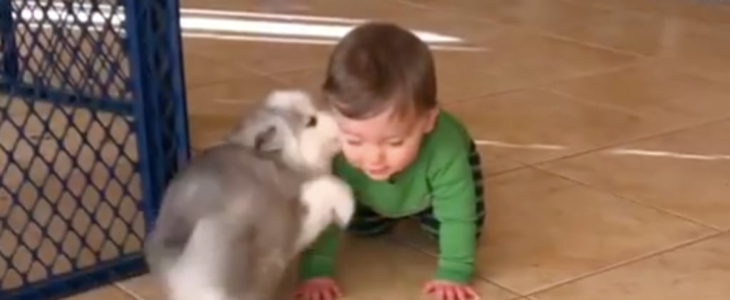 Video of Puppy Who Loves Children