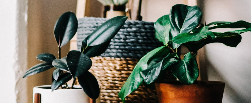 Best Houseplants For Air Quality