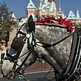 You can ride down Main Street USA in a car pulled by a very festive horse.